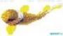 Мозаичное панно Piscine Anemone B